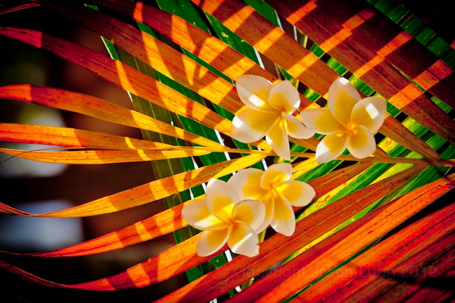 Bali-flowers-by-jason-lunn-1739